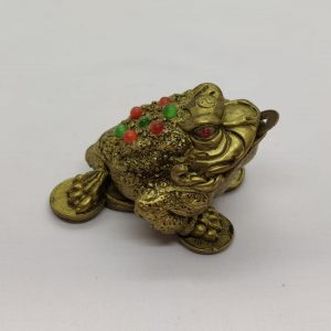Money Frog (C)